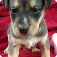 Adopt A Pet :: Jenica - Trenton, NJ