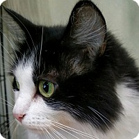 Adopt A Pet :: Patches - Yuba City, CA
