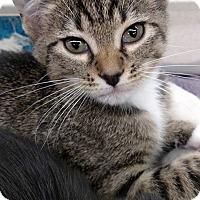Adopt A Pet :: Highway - Bridgeton, MO