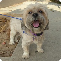 Adopt A Pet :: Benson - Los Angeles, CA