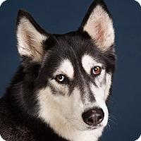 Adopt A Pet :: Rey - Carrollton, TX