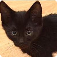 Adopt A Pet :: Lucy AKA Hoki - LaJolla, CA