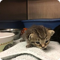 Adopt A Pet :: Thea - Janesville, WI