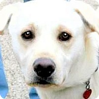 Adopt A Pet :: ARCHER(LOVES HIS FAMILY!!) - Wakefield, RI