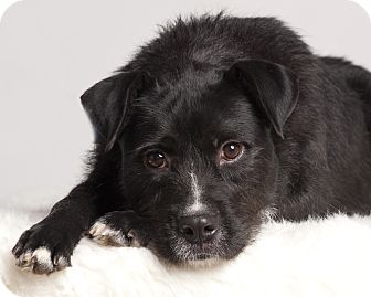 Terrier (Unknown Type, Medium) Mix Dog for adoption in Baton Rouge, Louisiana - Annie