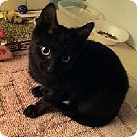 Adopt A Pet :: Asher - Cocoa, FL