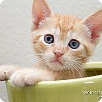 Adopt A Pet :: Taber - Irvine, CA
