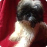 Adopt A Pet :: Bambi - Hazard, KY