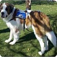 Adopt A Pet :: Patches - Glendale, AZ
