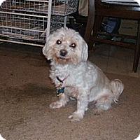 Adopt A Pet :: Rebel (FL) - Gainesville, FL