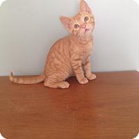 Adopt A Pet :: Speedy - Union, KY