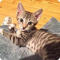 Adopt A Pet :: Leila - Phoenix, AZ