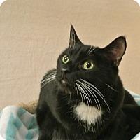 Adopt A Pet :: Gandolf - Foothill Ranch, CA