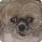 Adopt A Pet :: Alley