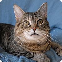 Adopt A Pet :: Brin - Winchendon, MA
