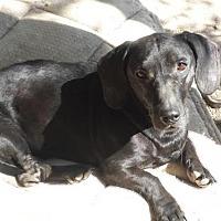 Adopt A Pet :: Sophie - Sunset, LA