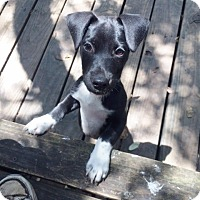Adopt A Pet :: Linus - Fair Oaks Ranch, TX
