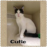 Adopt A Pet :: Cutie - Walnut Creek, CA
