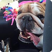 Adopt A Pet :: Nike - Park Ridge, IL