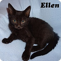 Adopt A Pet :: Ellen - Bentonville, AR