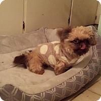 Adopt A Pet :: Ninja - Schofield, WI