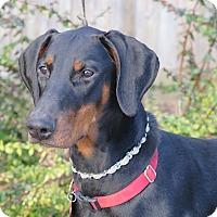Adopt A Pet :: shauna - Tracy, CA
