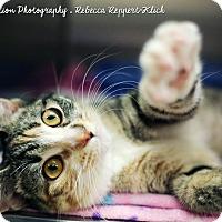 Adopt A Pet :: Tigger - Appleton, WI