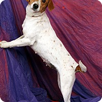 Adopt A Pet :: Betty Rat T - St. Louis, MO