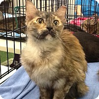 Adopt A Pet :: Smoke - San Antonio, TX