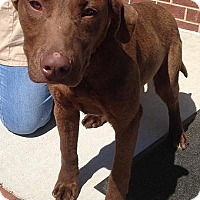 Adopt A Pet :: Malcolm - Purcellville, VA