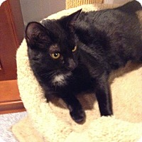Adopt A Pet :: Tabitha - Turnersville, NJ