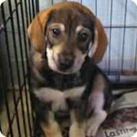 Adopt A Pet :: Vectra - Royal Palm Beach, FL