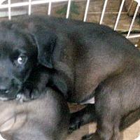 Adopt A Pet :: ONYX - Ventnor City, NJ