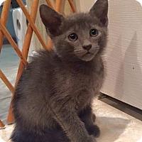 Adopt A Pet :: Grayson - Homestead, FL