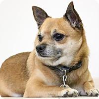 Adopt A Pet :: Tiko D161681 - Edina, MN