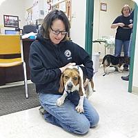 Adopt A Pet :: Moe - Elyria, OH