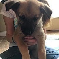 Adopt A Pet :: Nadine - DeForest, WI