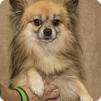 Adopt A Pet :: Rick - South Haven, MI