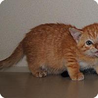 Adopt A Pet :: Clemson - Ridgeland, SC