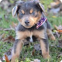 Adopt A Pet :: Joey - Denver, CO