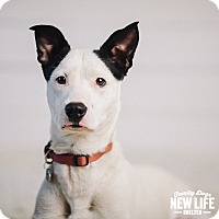 Adopt A Pet :: Sophie - Portland, OR