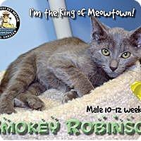 Adopt A Pet :: Smokey Robinson - Davenport, IA