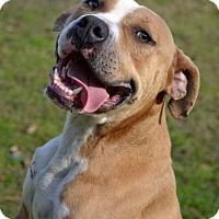 Adopt A Pet :: Frisco - Ridgeland, SC