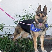 Adopt A Pet :: Lani - Downey, CA
