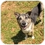 Photo 1 - Australian Cattle Dog/Shepherd (Unknown Type) Mix Dog for adoption in Key Biscayne, Florida - Pal