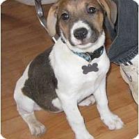Adopt A Pet :: Gracie - Golden Valley, AZ
