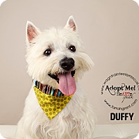 Adopt A Pet :: Duffy - Omaha, NE
