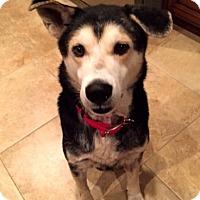 Adopt A Pet :: Barrett - Toledo, OH
