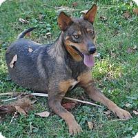 Adopt A Pet :: Kiya - Phoenix, AZ