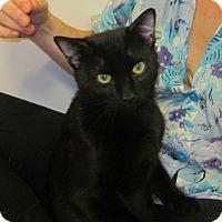 Adopt A Pet :: Dooley-Bombay Cutie'11 - New York, NY